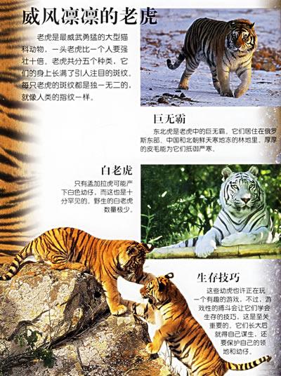 视觉奇观:猫科动物